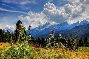 Croda Da Lago, Dolomites, Belluno, Blue