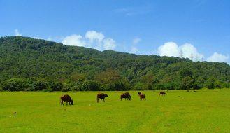 Goa Western Ghats Mountains Sahyadri India