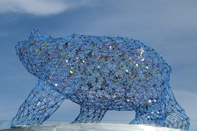 Art Bear Grid Animal Mammal Kelowna Britis
