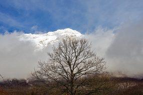 Gran Sasso, Tree, Branches, Snow, Fog