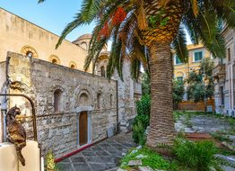Cat Sicily Messina Stray Ruins Palm Tree I