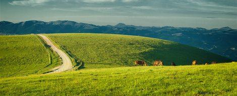 Umbria, Italy, Monte Subasio, Horses