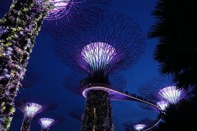 Singapore, Supertree Grove, Background