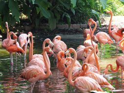 Flamingo, Water Birds, Exotic Birds