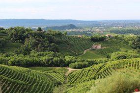 Italy Treviso Hills Veneto Wine Vineyard V