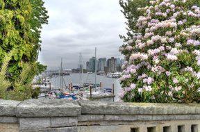 Vancouver, Marina, Flowers, Canada
