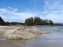 Vancouver Island Tofino Long Beach Sand Ro