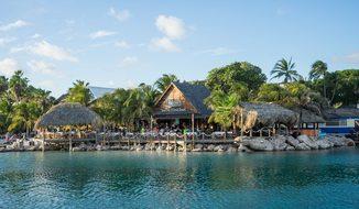 Caribbean Curacao Tropical Exotic Palm Tre